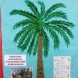 palmeradecanarias